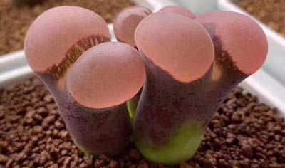 植物多肉团建